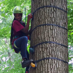 Tree World climbing center