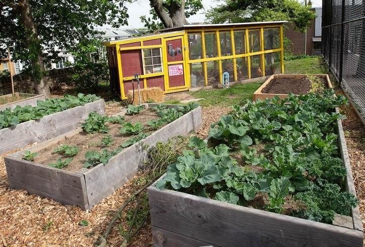 photo of raised garden beds and chicken coop